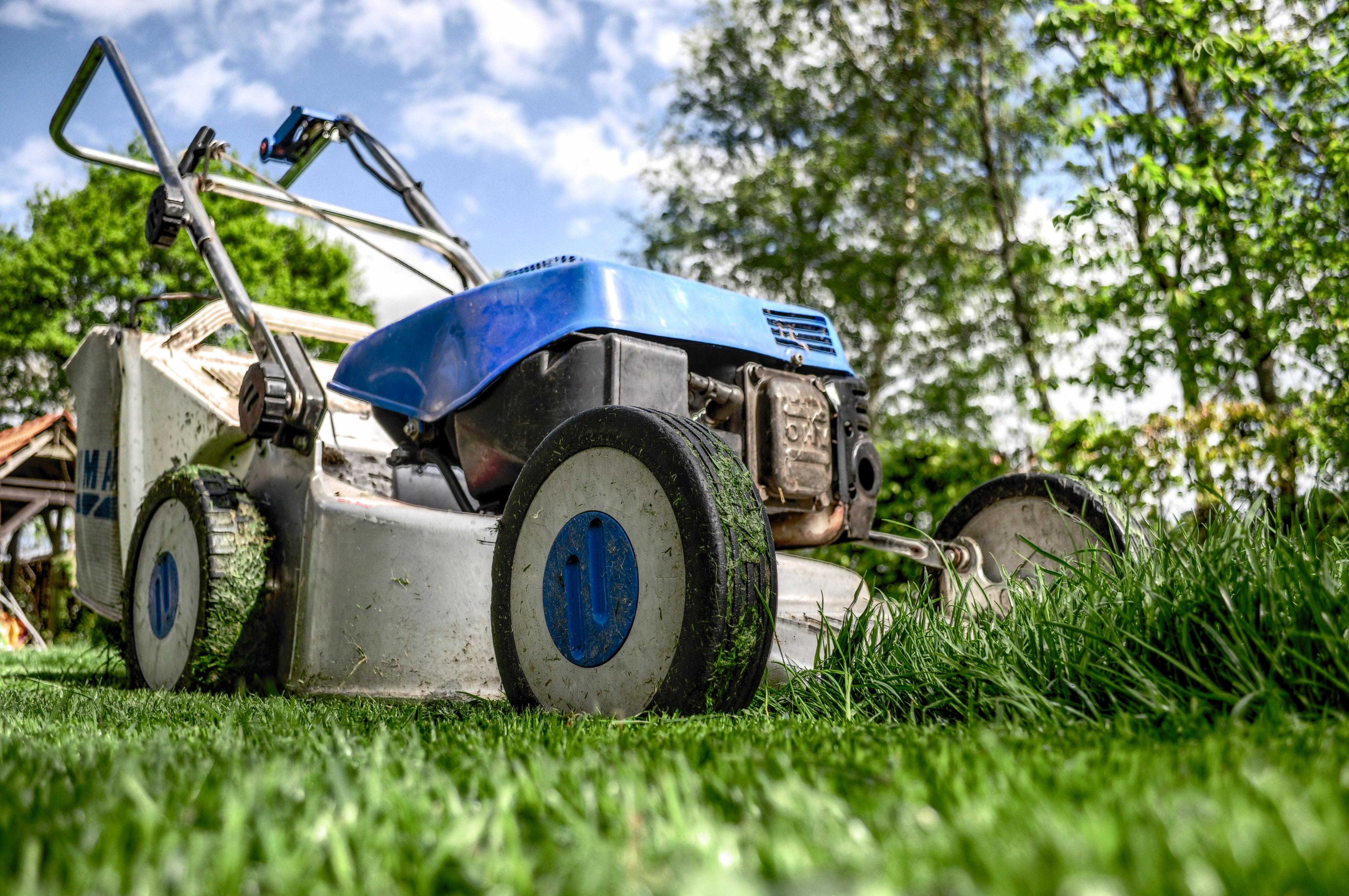 garden-gardening-grass-589